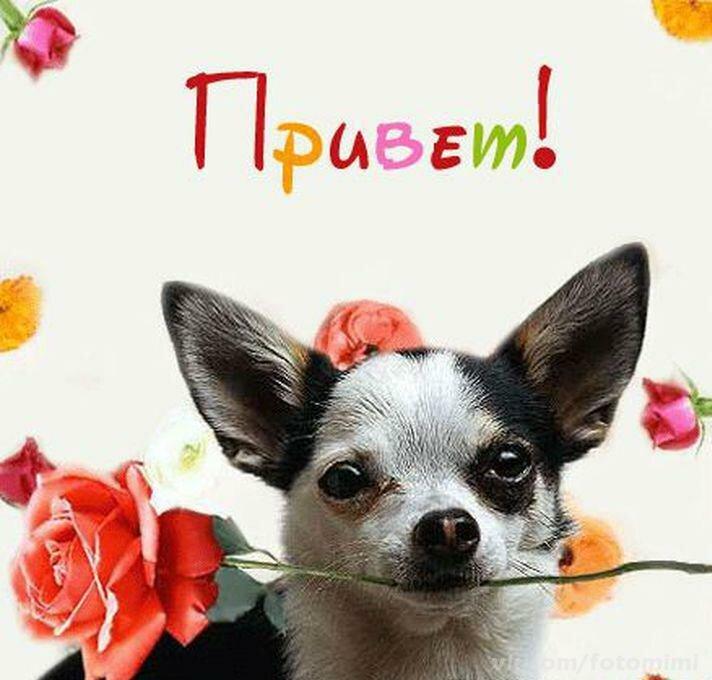 Резиночек для, фото собаки с надписью привет