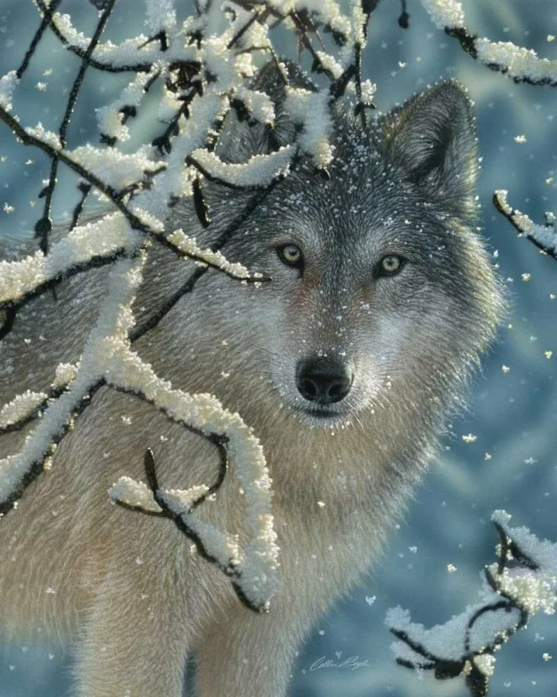 Надписью папочка, открытки и картинки с волками