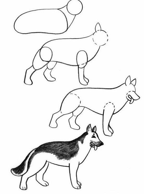 немецкая овчарка рисунок карандашом поэтапно для начинающих