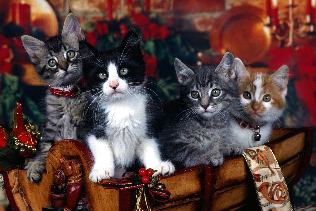 Новогодние картинки с котами на рабочий стол, для открыток