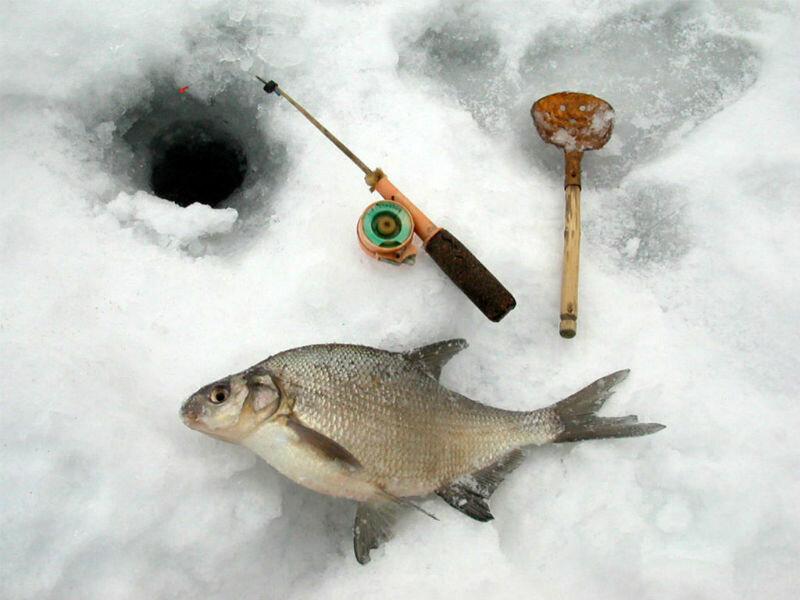 зимой рыбалка со льда снасти фото сложилась судьба бывшей