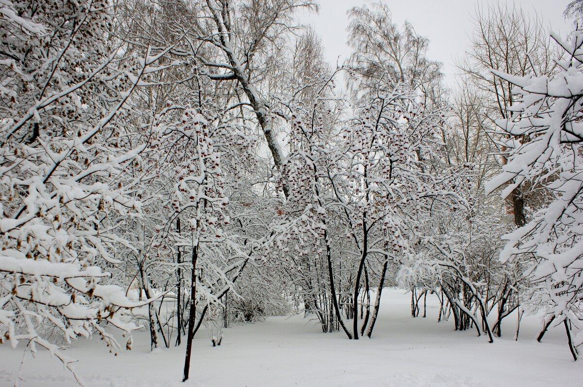 Александр зырянов новосибирск фото