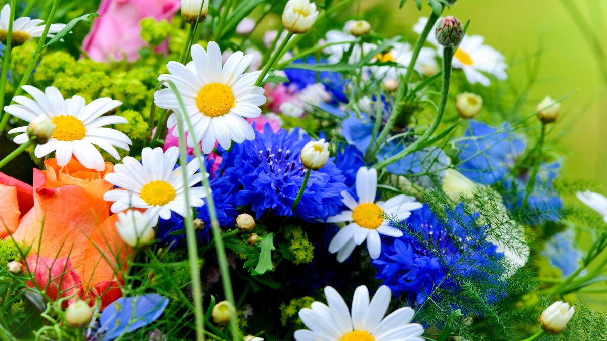 Полевые цветы в открытках, летием маму