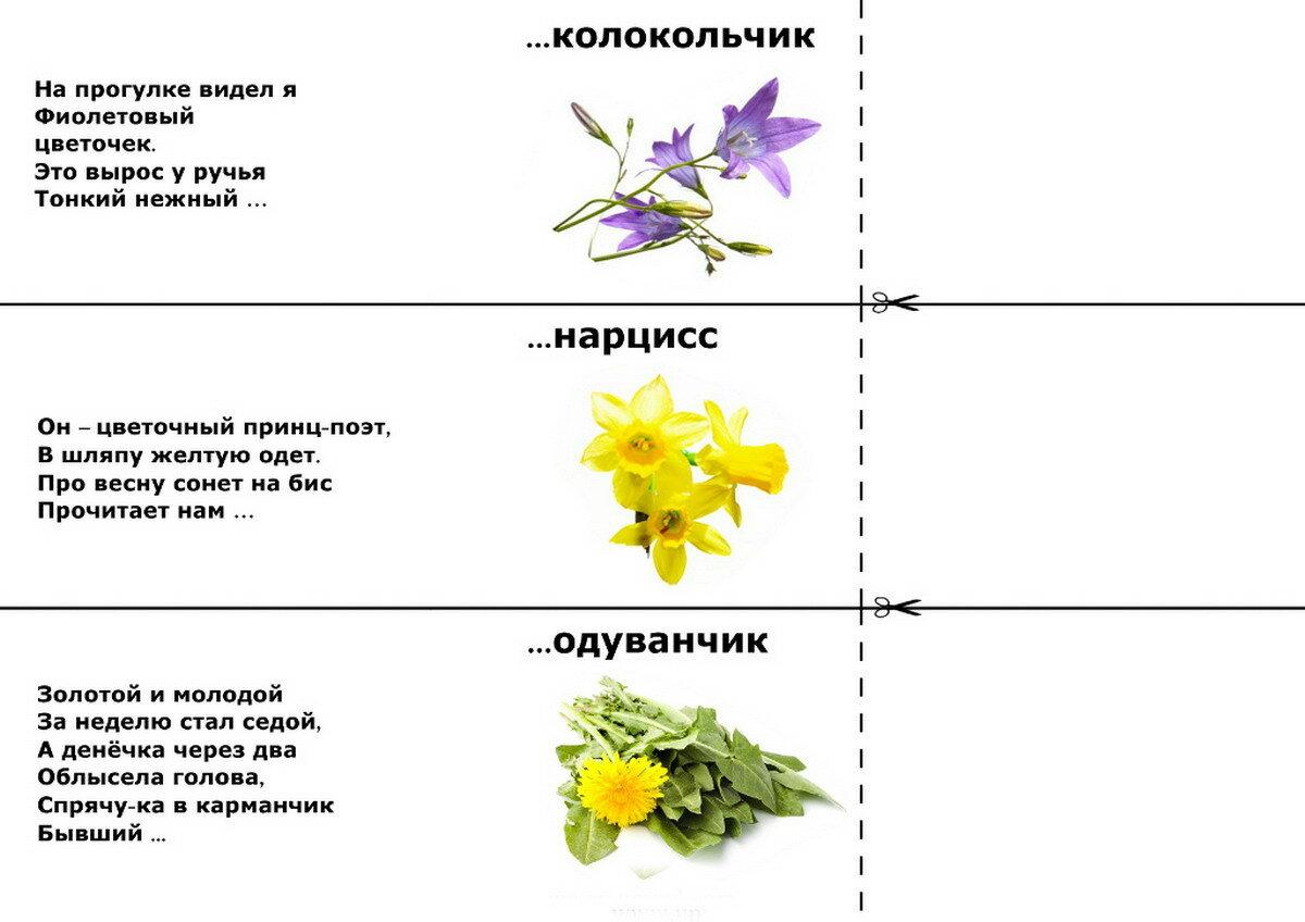 Про букет цветов загадки, цветов иркутске недорого