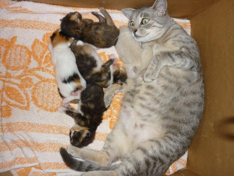 Прикольные картинки с котами и надписями до слез