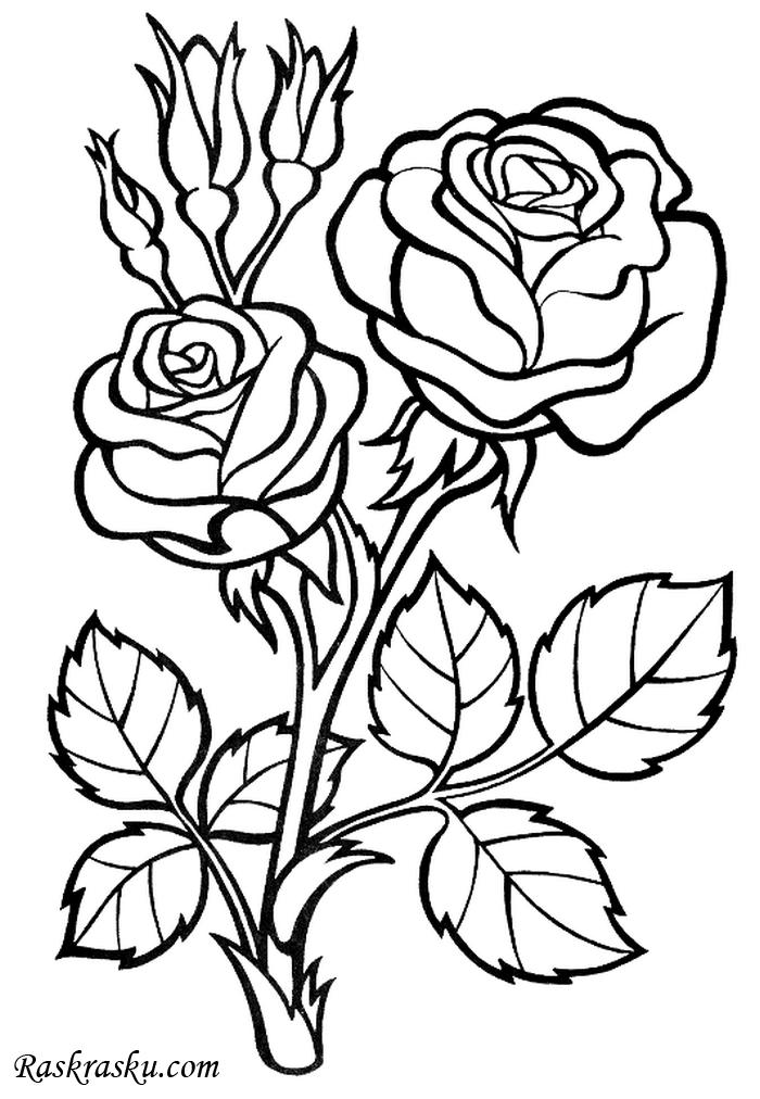 Музыкальные, открытка цветы раскрасить