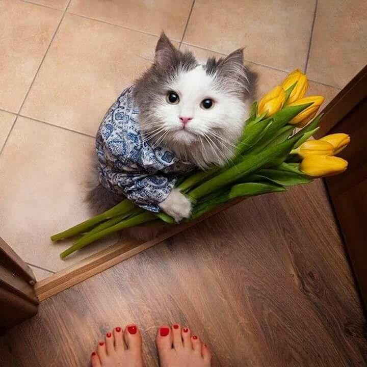 Картинки с котами 8 марта