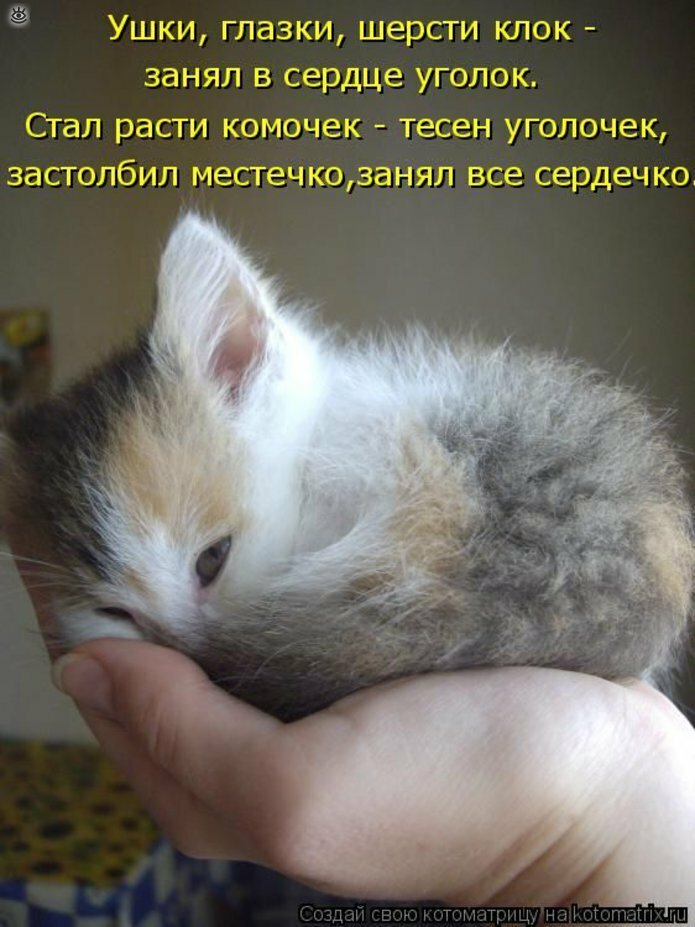 Смешные картинки про котов с надписями для детей
