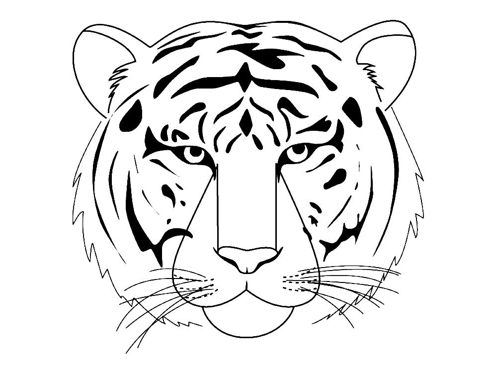 Картинки тигра карандашом поэтапно
