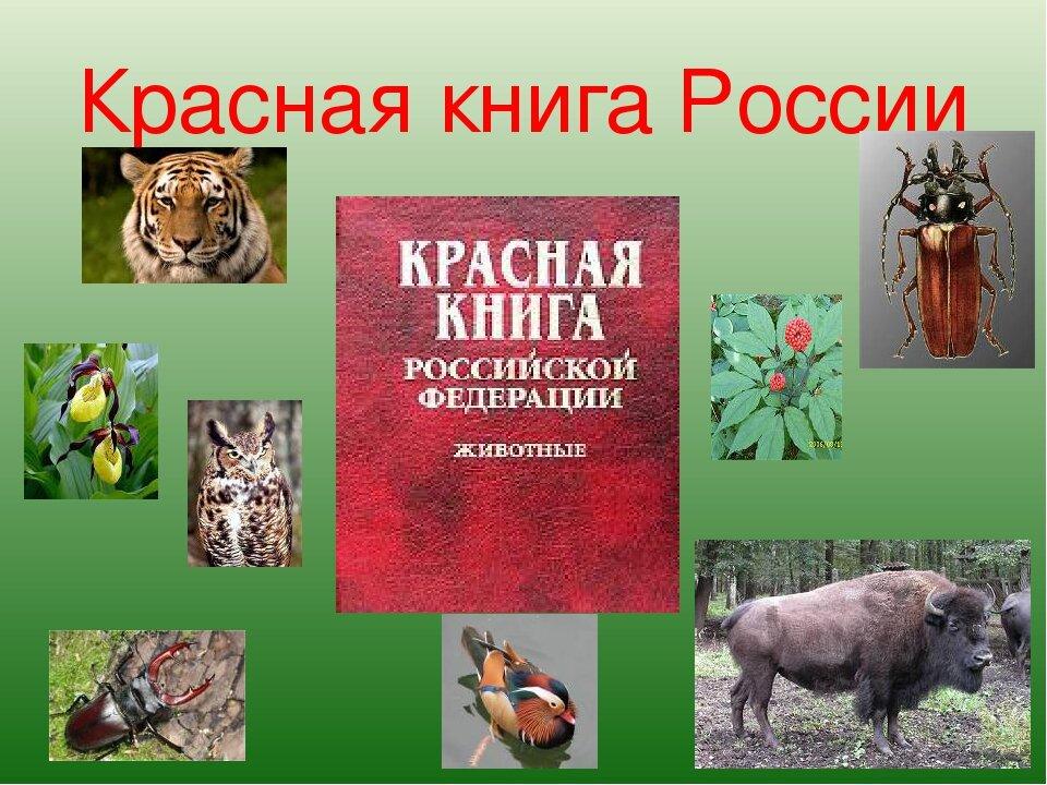 сообщение о красной книге картинки сохранить