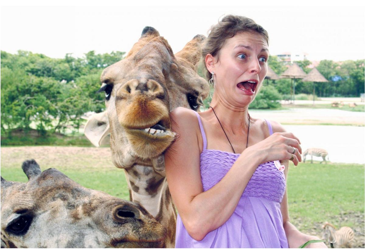 Про, животные и люди смешные картинки