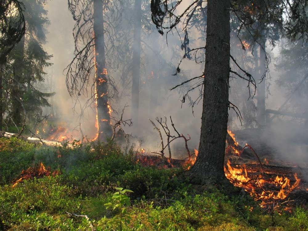 Картинка про лесной пожар
