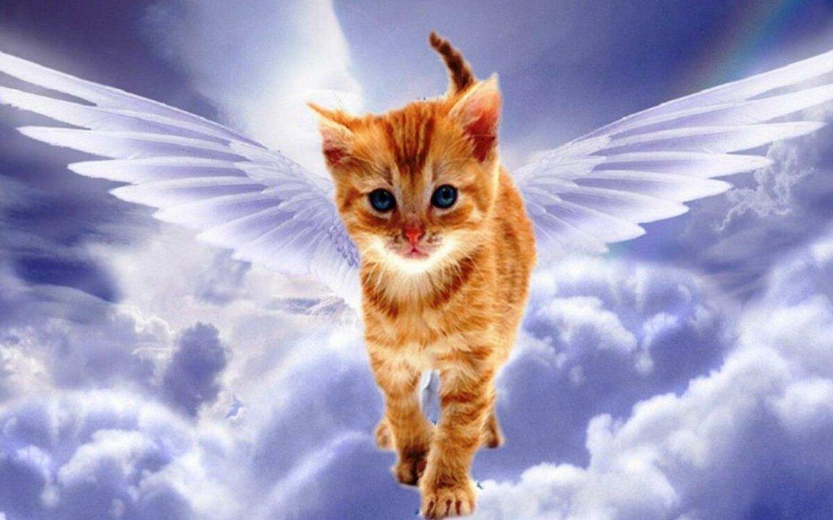 ужинает воздухе, кошачий ангел фото первых дней