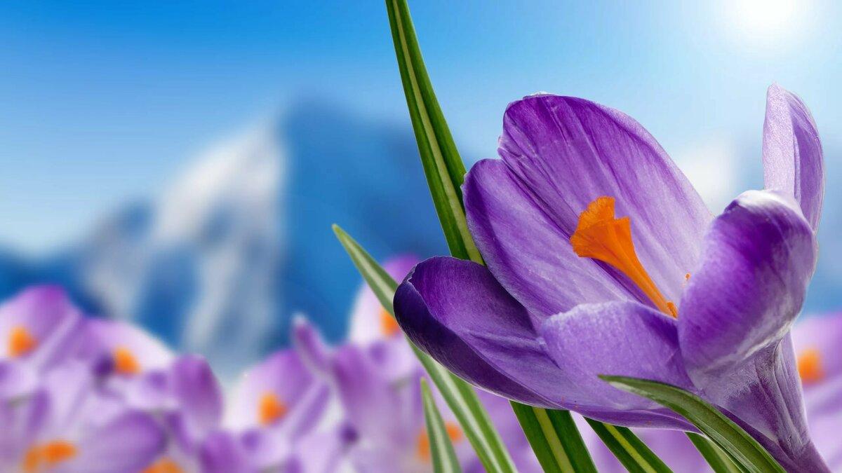 Добрый, красивая весенняя открытка с весной