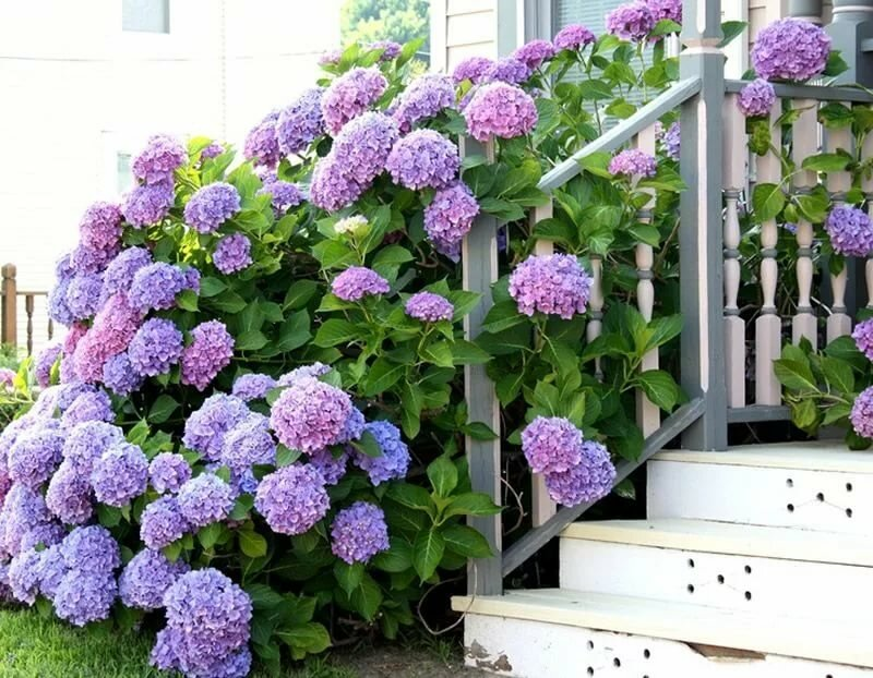 Цветы на дачном участке картинки
