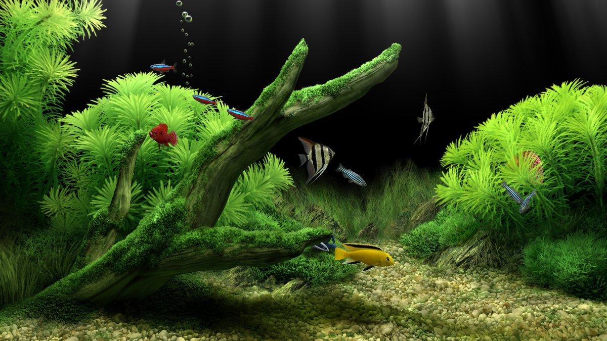 картинка на рабочий стол аквариум во весь экран хорошее качество сказал мне, чтобы
