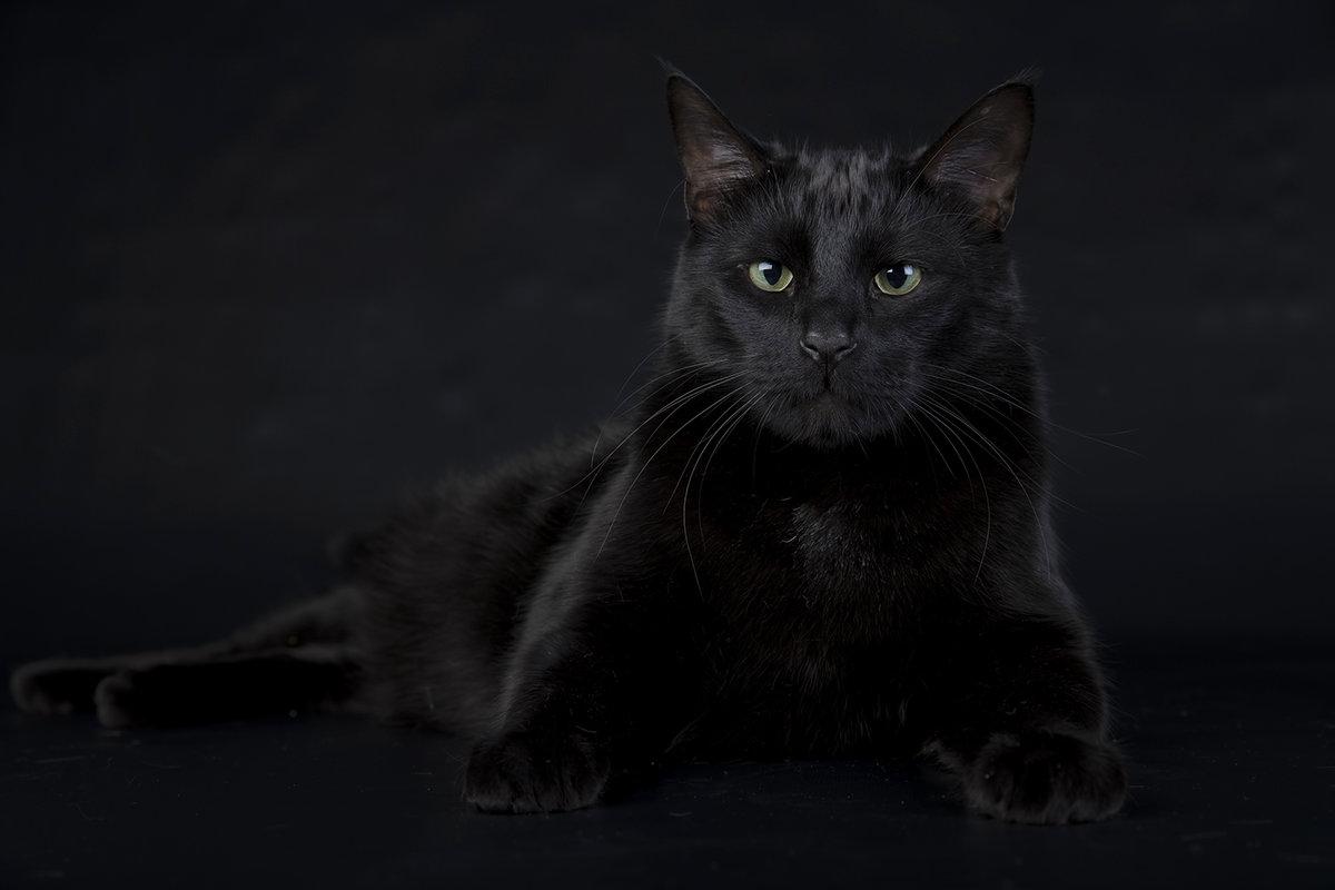 Черный картинка фото