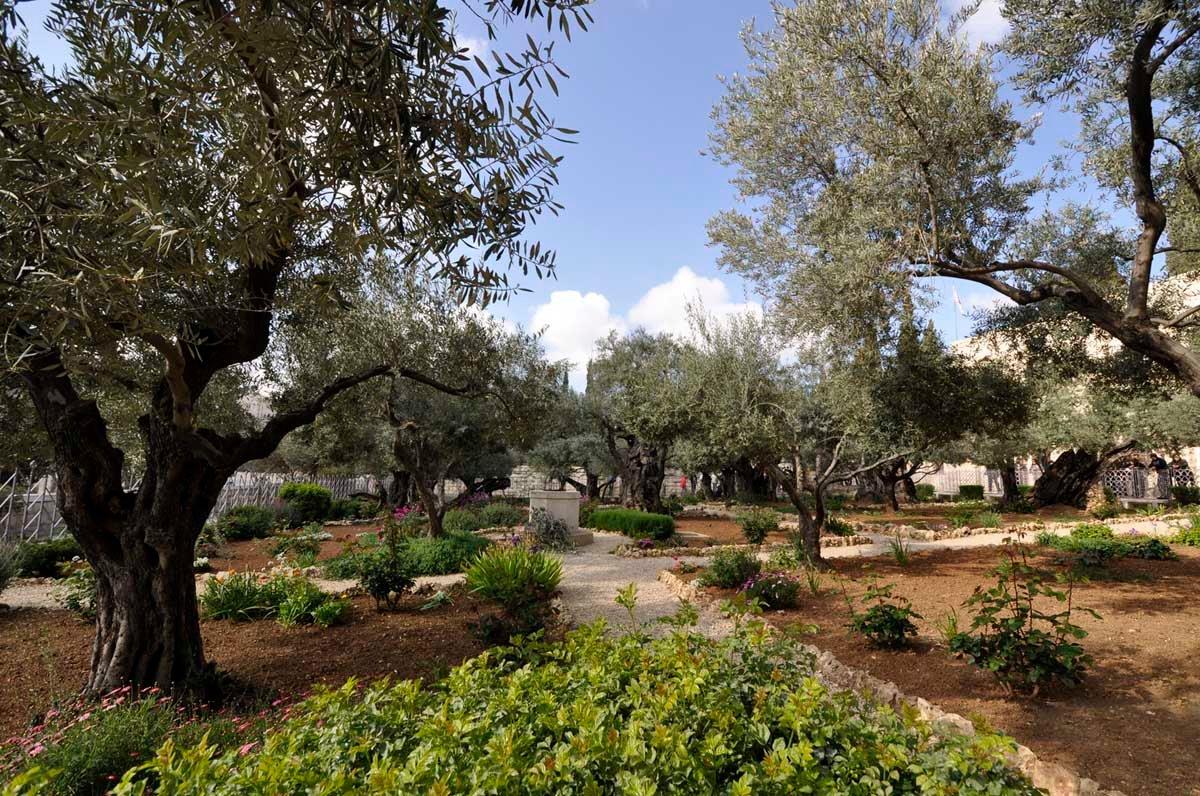 гефсиманский сад иерусалим фото вид