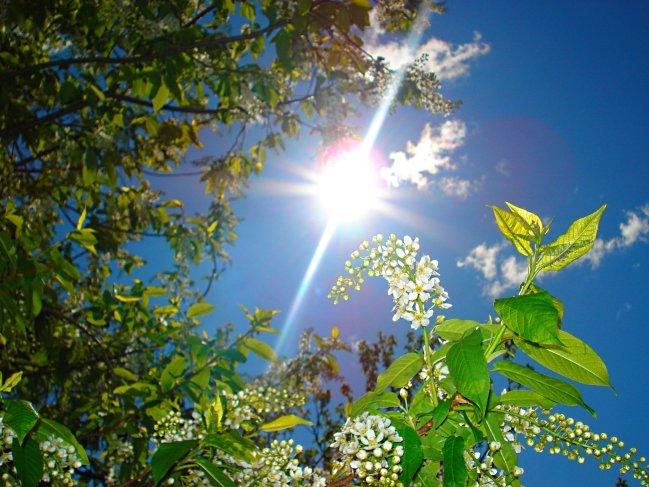 Как фотографировать при очень ярком солнце парень будет