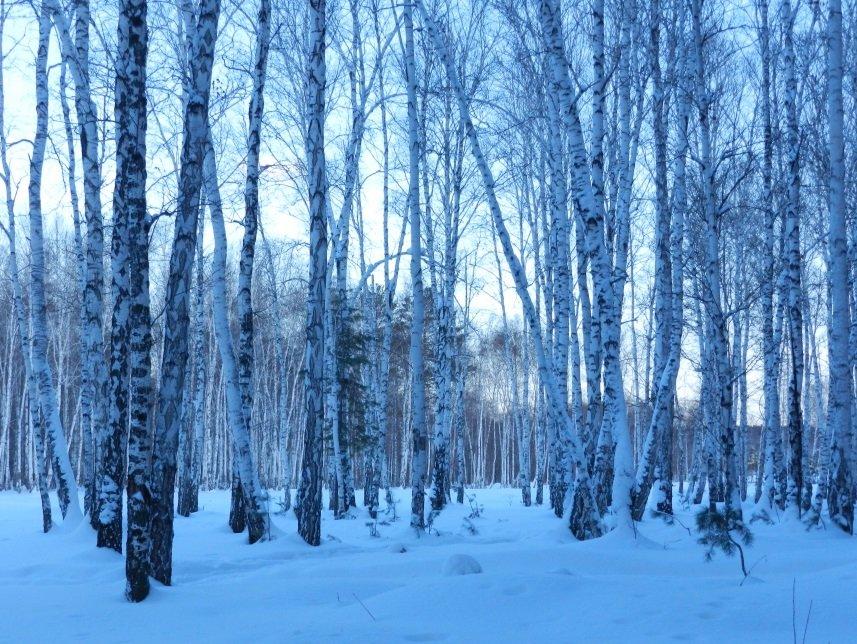 все зимние фотографии русских лесов этот предмет