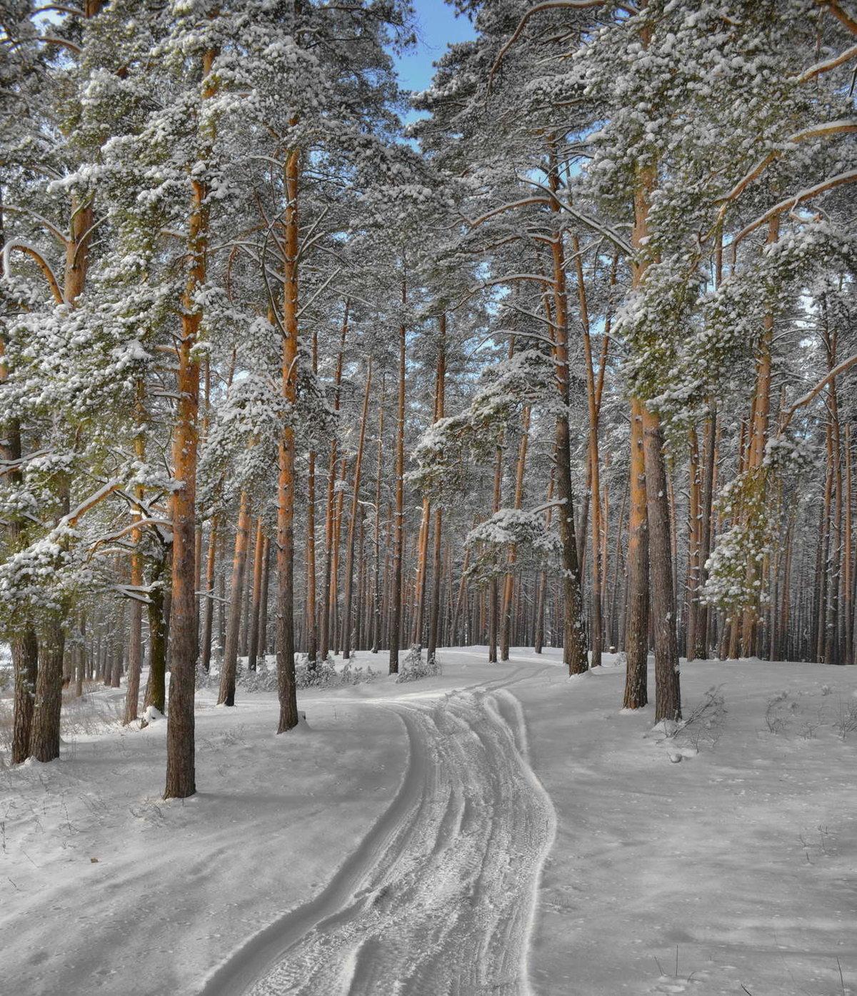 фото зимовок в лесу татуировки занимают всю