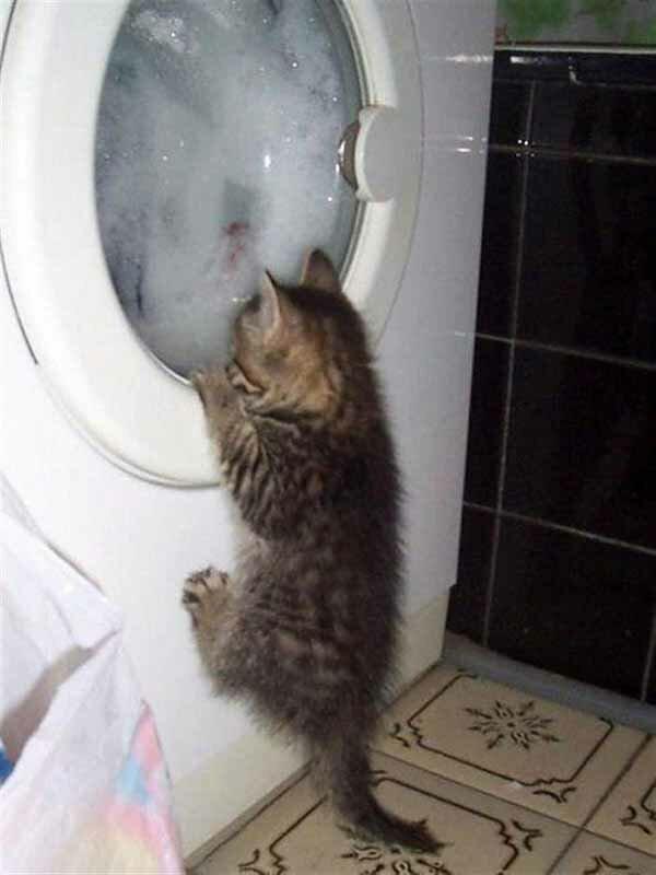 Кошачье любопытство фото 6