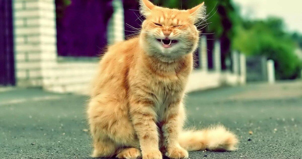 Картинки про кошек прикольных