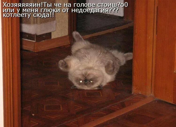 Очень смешные картинки до слез с надписями котов и кошек, днем рождения