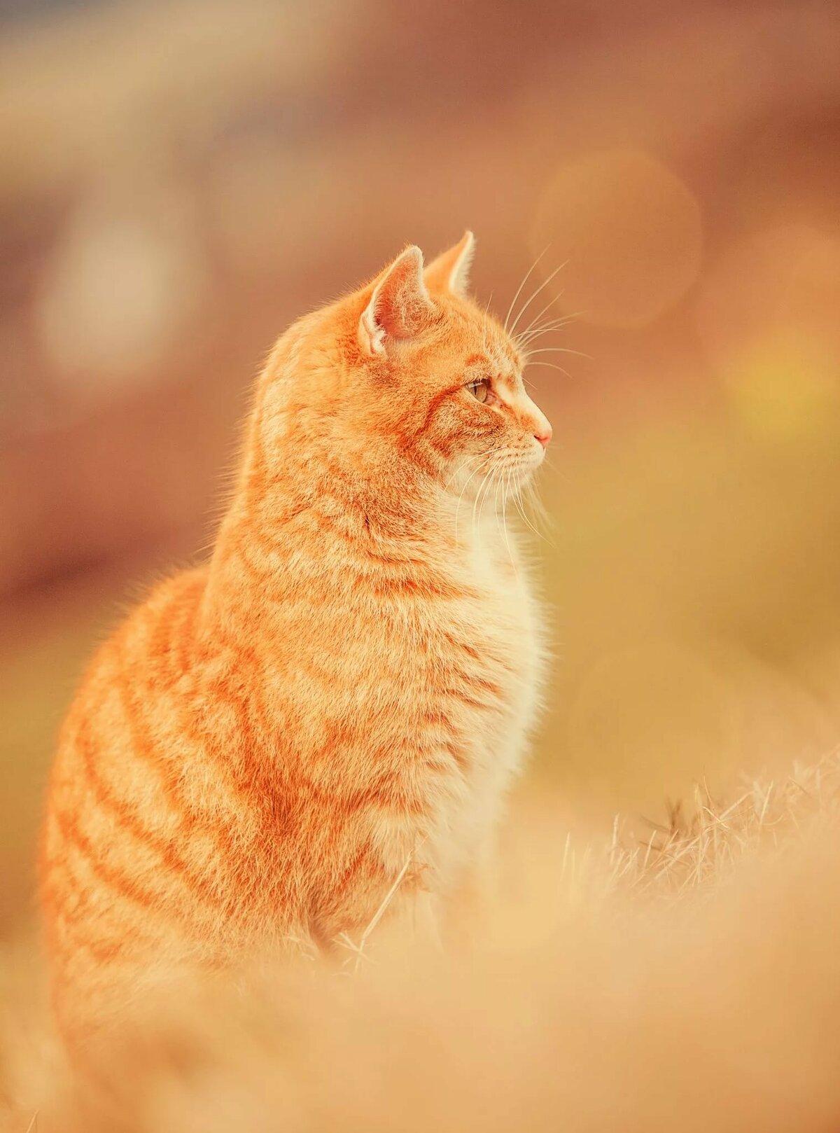 фото для авы солнечная кошка приключений