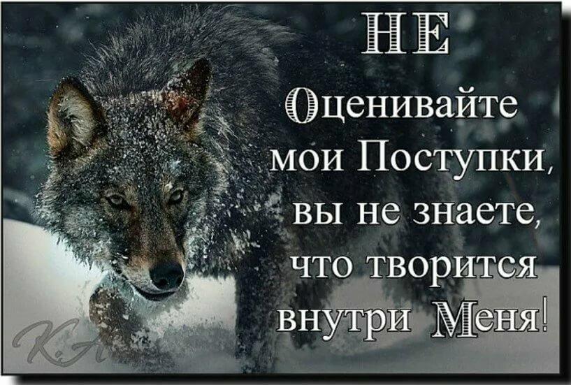 Волки статусы картинки