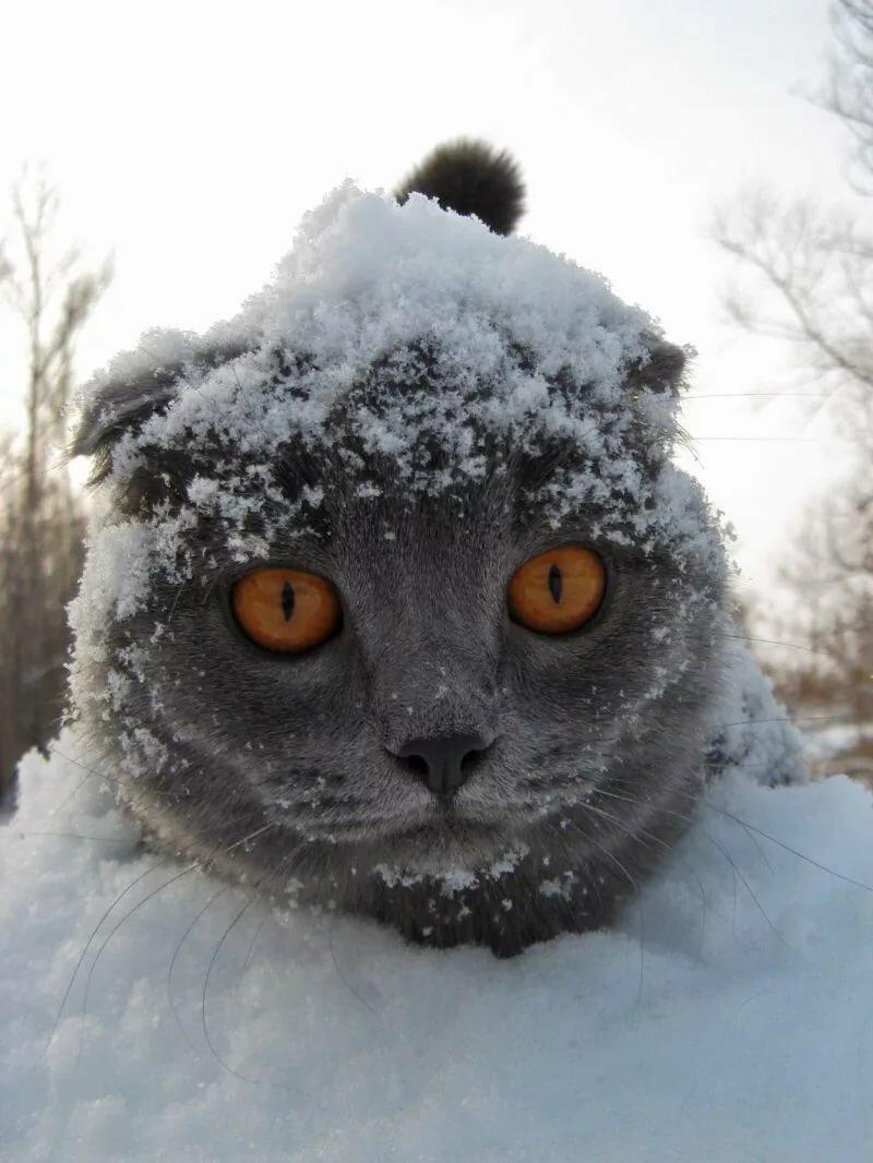 Картинка снег прикольная