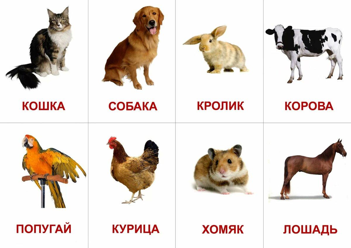 Животные в картинках для детей распечатать