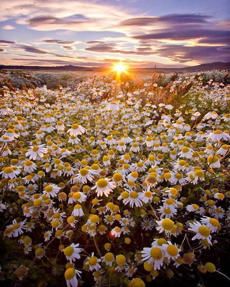 возникает картинки с добрым вечером с видом на солнечное поле ромашек рагнар