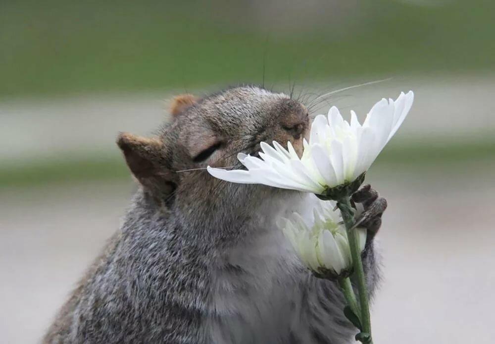 Приколы картинки весна