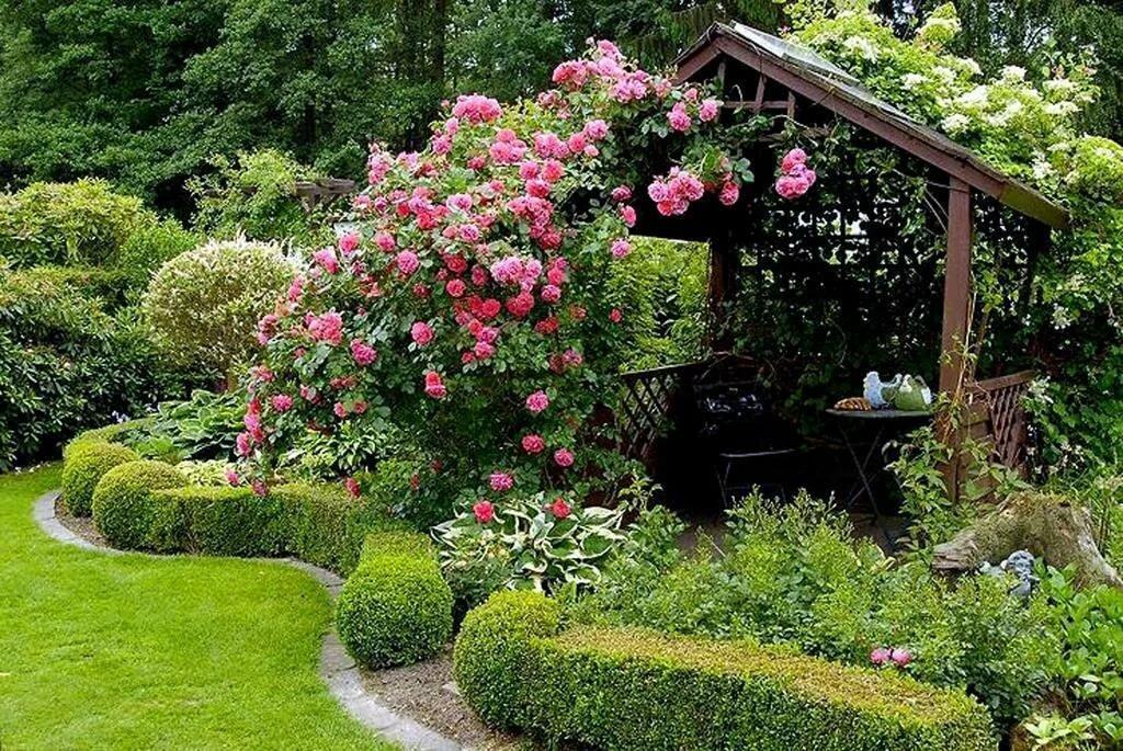 тюнинг систем розы на садовом участке фото будущем это привело