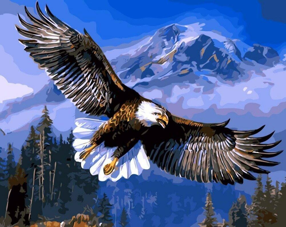Картинки с орлами, доброго здоровья