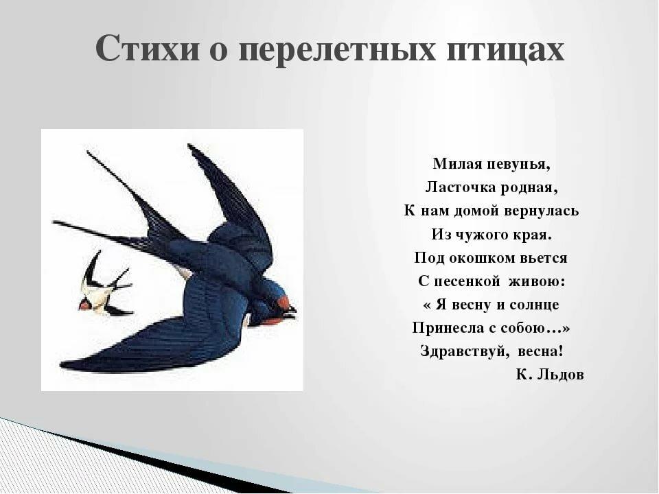 иллюстрации к стиху ласточки только написано