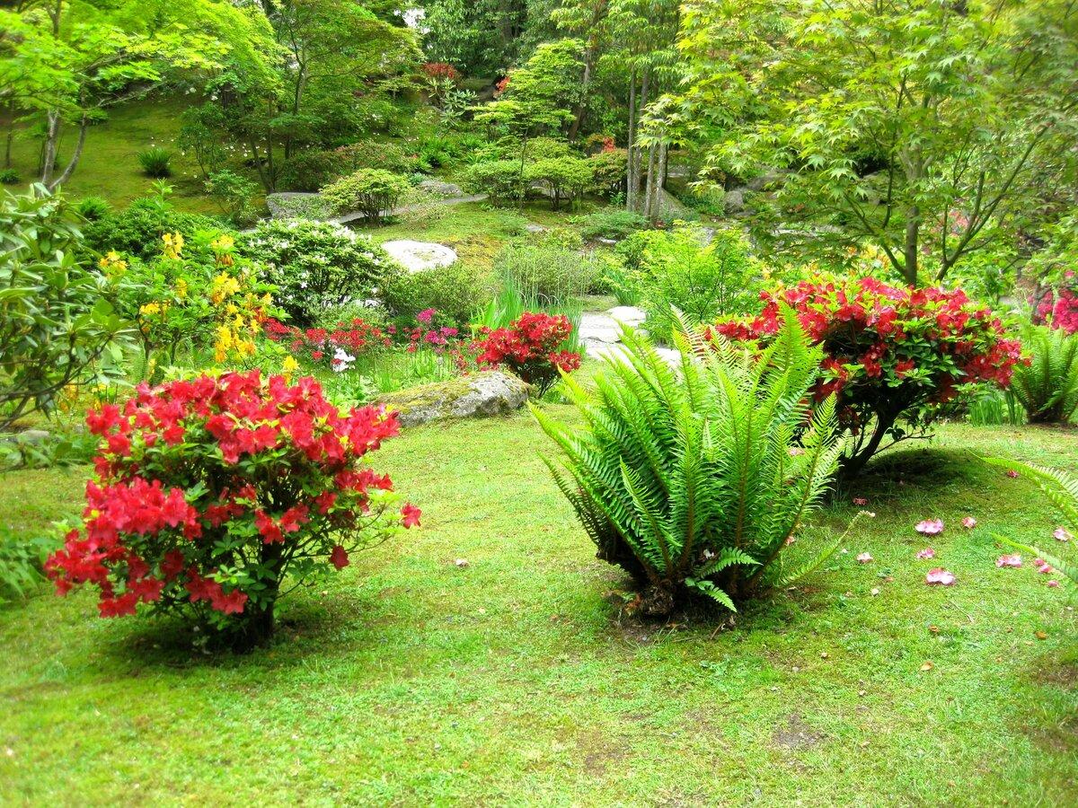 ландшафтные растения фото с названиями можно увидеть постройки