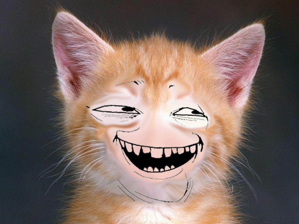 Картинка прикольная улыбка кота
