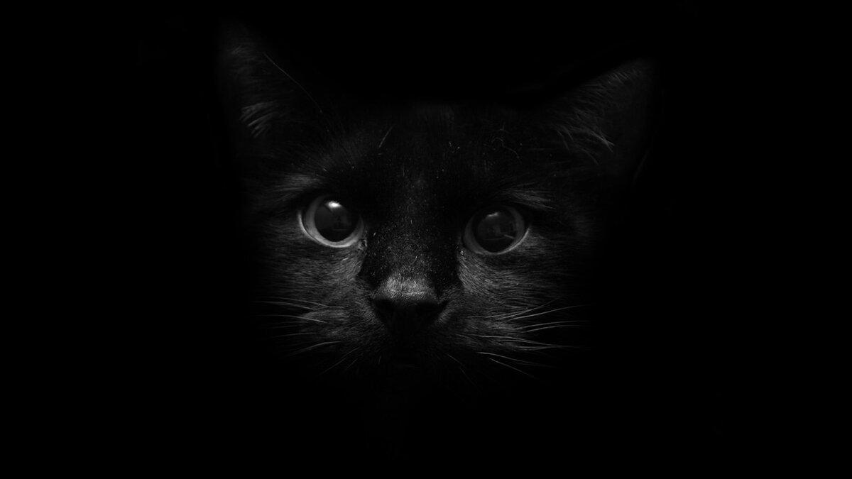 Филином, прикольные картинки черные