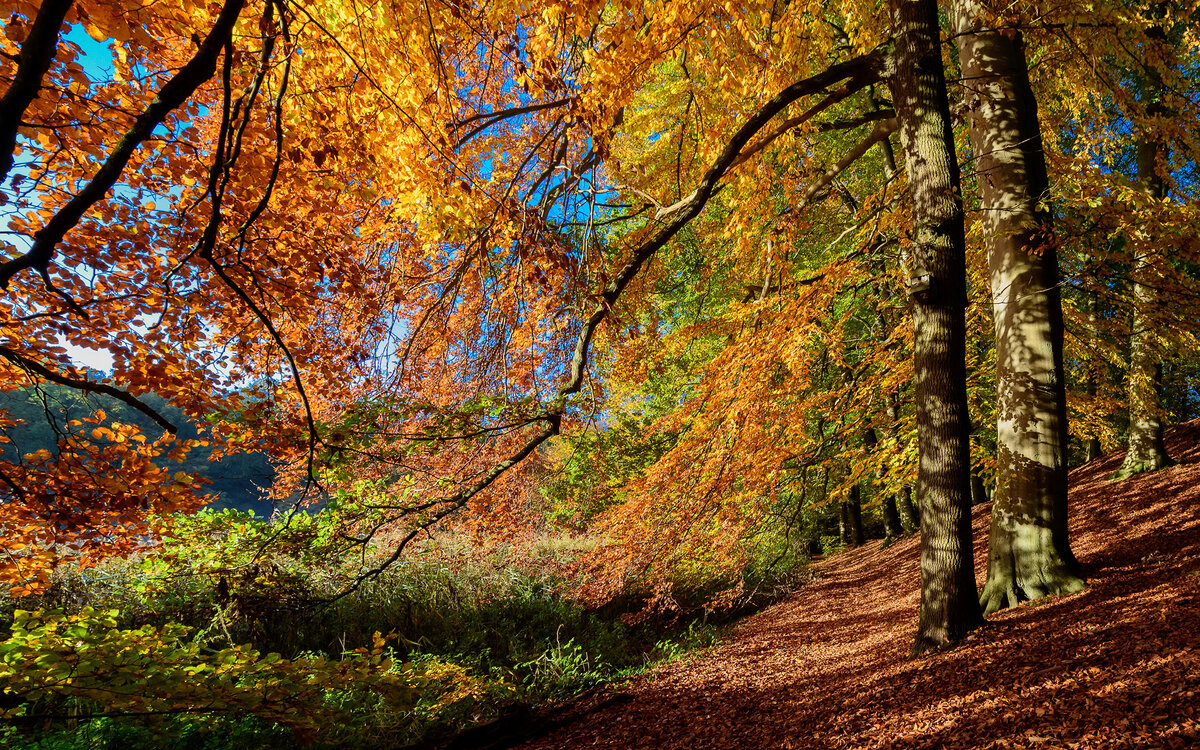 Фото природа осеннего леса