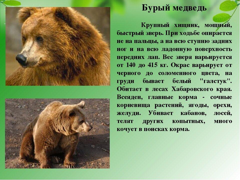 Звери красной книги россии