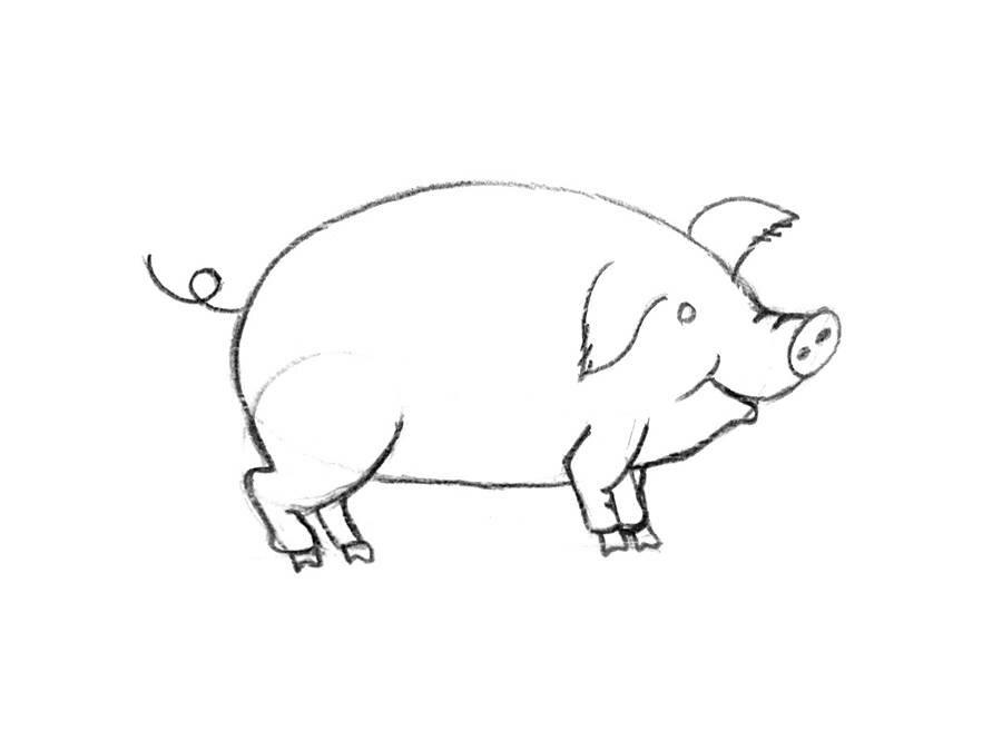 Коллегу, рисунки свиньи прикольные карандашом поэтапно
