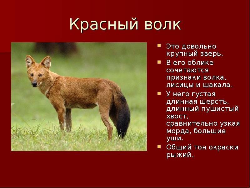 Фото и описание животного россии мех