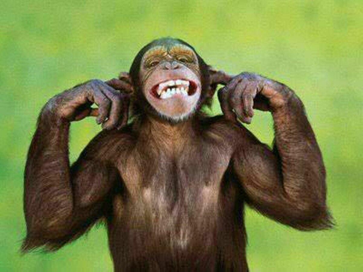 Прикольные картинки фото для поднятия настроения, пенсионеров смешные