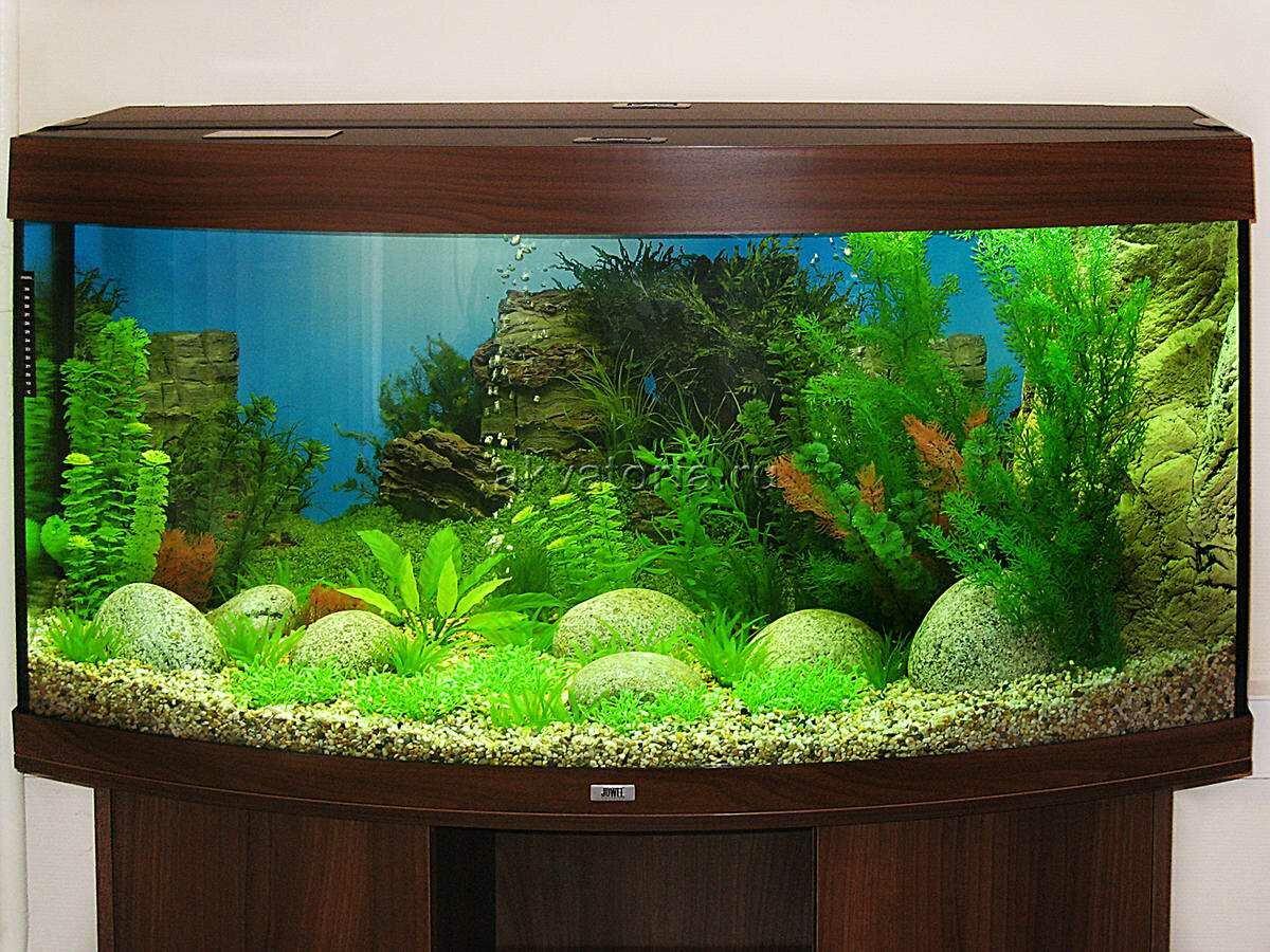 каждым новым как украсить аквариум своими руками фото вот опоясывать лентой