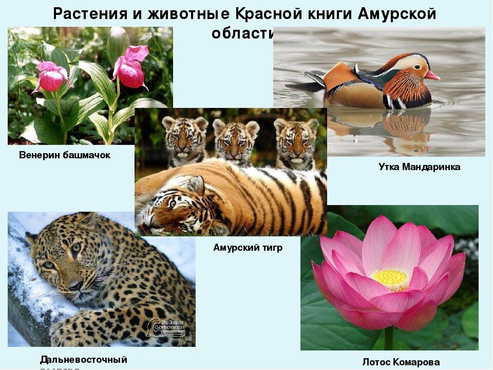картинки из красной книги животные и растения россии имя