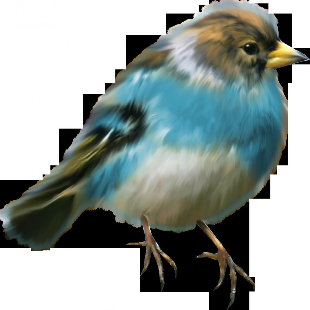 Картинки крутые, птицы на картинках для детей