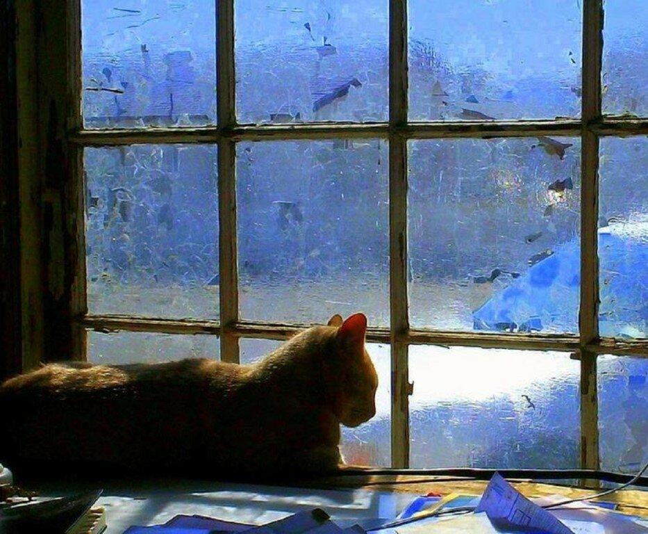 Картинках для, картинки два котика черный и рыжий под пледом у окна зимой