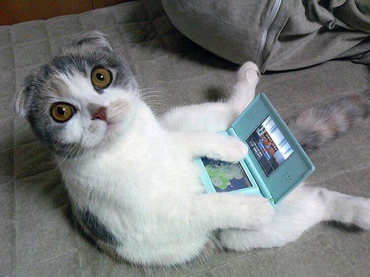 Смешные картинки про кошек смешные до слез